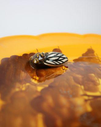 Vallauris Cicada